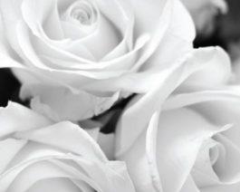 Carte de condoléances personnalisée roses – Réf. 85-512